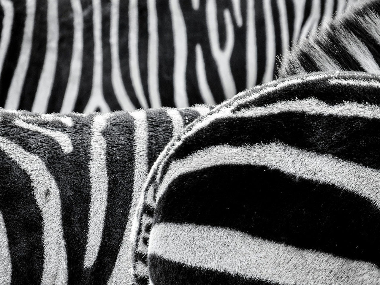 stripes photo